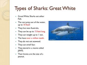 This slide describes features of a Great White shark