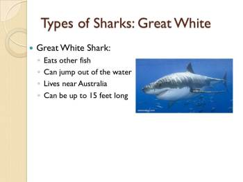 This sldie describes the features of a Great White shark